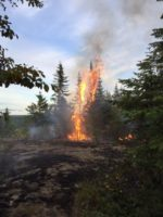 MNRF Seeks Public's Help Identifying those Responsible for Forest Fire in Nipigon